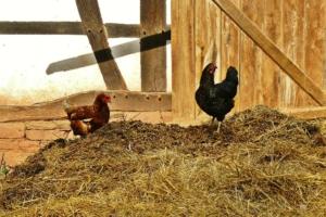 Hühnerhaus - Bauernhof